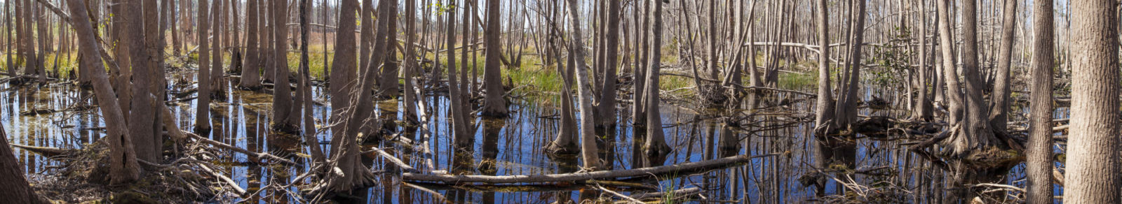 Swamp land, marsh in Louisiana